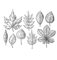 autumn drawing leaves set Isolated objects vector image vector image