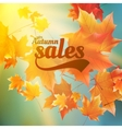 Autumn sale realistic Leaves typography poster vector image vector image