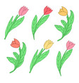 cartoon cute colored tulips vector image