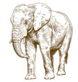 engraving drawing of big elephant vector image