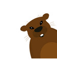 groundhog on a white background vector image vector image