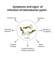 Helicobacter pylori Symptoms of infection vector image vector image