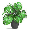 monstera in a pot vector image vector image
