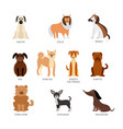 set breeds pets animals and dogs vector image vector image