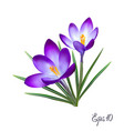crocus flowers elegant vintage card vector image