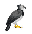 dangerous bird character vector image vector image