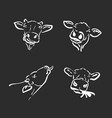 group a cow head on black background farm vector image vector image