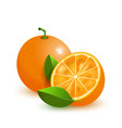 fresh orange with green leaves isolated on white vector image