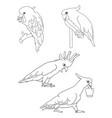 parrot cockatoo line 06 vector image