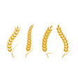 agriculture wheat vector image