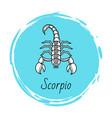 scorpio zodiac sign astrology and horoscope vector image vector image
