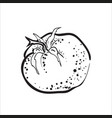 hand drawn sketch tomato vector image