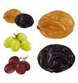 raisin dried grape 3d realistic icon set vector image vector image