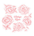 roses hand drawn sketch set vector image vector image