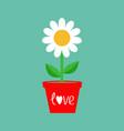 daisy in red pot camomile icon white chamomile vector image