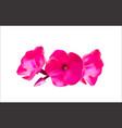 Pink Phlox Flowers vector image