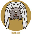 portrait of lhasa apso vector image vector image