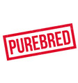 Purebred rubber stamp vector image