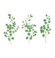 sample of branches with eucalyptus leaves vector image vector image
