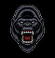 a colorful a gorilla head vector image