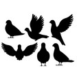 black silhouette icon set pigeon bird flying vector image vector image