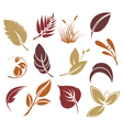 Collection colourful autumn leaves vector image vector image