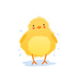cute baby chicken shaking water after bathing vector image vector image