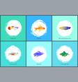 neon tetra fish blue tamarin vector image