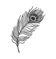 peacock feather sketch vector image vector image
