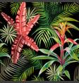 pink palm leaves bromelia black background vector image vector image