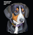 entlebucher mountain dog colorful portrait vector image vector image
