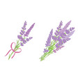 set of two lavender flowers bouquets vector image