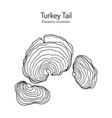 turkey tail mushroom trametes versicolor vector image