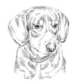 entlebucher mountain dog hand drawing portrait vector image vector image