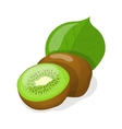 isolated kiwi fruits vector image vector image
