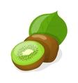 isolated kiwi fruits vector image
