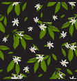 orange blossom flowers and leaves seamless vector image vector image