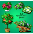 Home set of decorative flowering plants vector image vector image