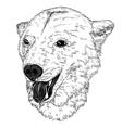 portrait of bear vector image