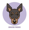 portrait of miniature pinscher vector image