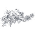 bouquet with hand drawn blossom branches and birds vector image