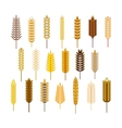 Ears of cereals and grains icons set vector image