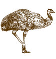 engraving drawing of ostrich emu vector image vector image