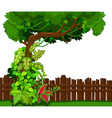 Wooden fence and tropical tree vector image
