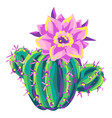 cactus decorative spiky mexican vector image