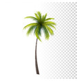 green classic palm vector image vector image