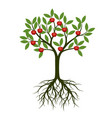 green tree with root and apple vector image vector image