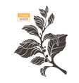 mate branch shape 3 vector image vector image