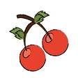 drawing sweet cherry fruit red vector image