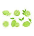 lime fruits citrus slices isolated green lemons vector image